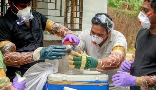 10 người Ấn Độ chết, hơn 90 người bị cách ly vì virus mới nổi Nipah